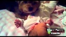 De drôles de Bébés Vidéo | Mignon Vidéos,Drôle de Bébé Rire compilation 2015