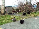 The Feral Cat colony of French Creek