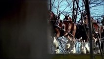 Budweiser Super Bowl Commercial - Clydesdales 911 Tribute