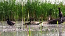 Uccelli e Mammiferi a Ultima Frontiera nel Delta del Danubio