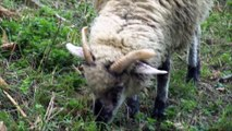 Kompilacja Zwierząt: Mrówki Kocuby I Krowy- Baw się z nami
