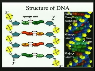 Biology 1A - Lecture 17: Genes Are Made Of DNA