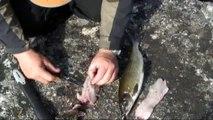 Slik sløyer du fisk ~ Lars Monsen's Tips og Triks (HD)