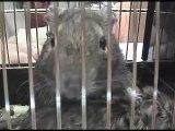 Den zvířat na ZŠ Velká Bíteš 6. 10. 2008