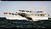 Whale Watching San Francisco | Whale Watching San Francisco Deals