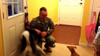 Top 10 Dogs Welcoming Soldiers Home Compilation 2015