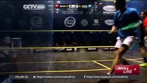 2895 sport CCTV Afrique Egypt Squash  North African Players Aim To Become World Contenders