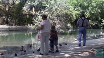 Please Don't Feed the Ducks - Tips from a Wildlife Biologist