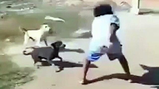 Man vs Dogs ~!!