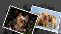 САМЫЕ СМЕШНЫЕ СОБАКИ 2015 - Лучшая Подборка #6 - Прикольные и Весёлые Собаки - ДО СЛЁЗ (2)