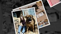САМЫЕ СМЕШНЫЕ СОБАКИ 2015 - Лучшая Подборка #72 - Прикольные и Весёлые Собаки - ДО СЛЁЗ