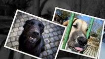 САМЫЕ СМЕШНЫЕ СОБАКИ 2015 - Лучшая Подборка #80 - Прикольные и Весёлые Собаки - ДО СЛЁЗ