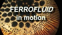 ferro fluid with brownian motion