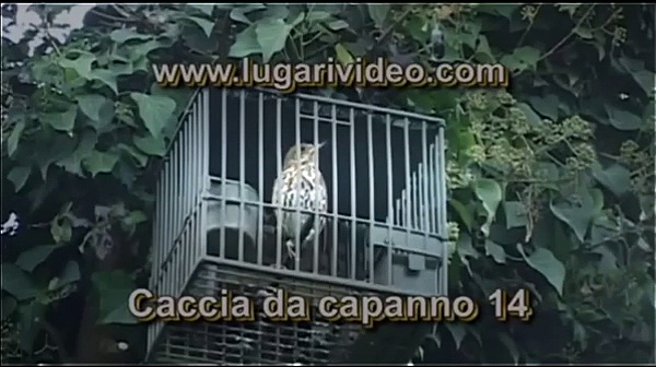 Hunting Pigeons in Italy – Lugari Video Trailers – Chasse Pigeon