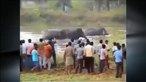 Angry Elephant Suppressed the Crowd in India