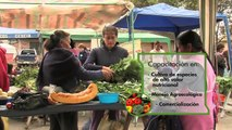 Proceso de producción, comercialización y consumo de hortalizas - Ecuador