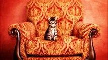 【かわいい】猫ちゃん20連発 Part2   Cute Cats 20 Part2