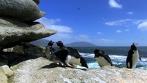Penguin Fail  Best Bloopers from Penguins Spy in the Huddle Waddle all the Way