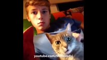 ,funny cats compilation vines,funny cat vines compilation,funny cat vines try not to laugh