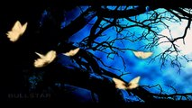 Tim Janis:  For You Alone -- Egyedül Neked  ( HD - Qality )