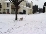 Shih Tzu Snow Dog - The Shih Tzu Strikes Back!