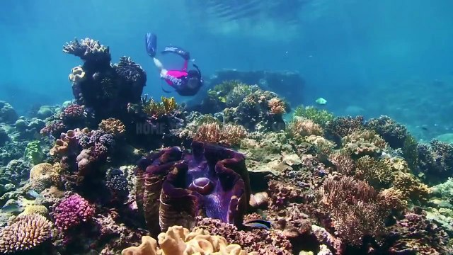 Great Barrier Reef: The Greatest Reef on Earth