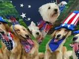 Happy Fourth of July! Patriotic Puppies   LOL!