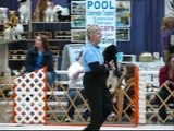 Agility Pug CHARLIE Seattle AKC march 09