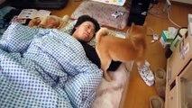 Des Vidéos drôles de Chiens Et de Chats 2015 animaux Mignons compilation 2015