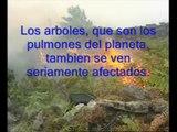 Contaminacion ambiental, calentamiento global y efecto invernadero