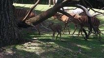 Eisbären - Roter Vari - Giraffen - Erdmännchen - Tierpark Hellabrunn