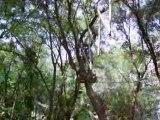 Acro-branche suite et fin