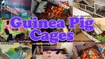 Guinea Pig Cage Guide - Minimum Cage Size, C&C Cages & More