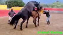 Funny videos   Animal matting 2015   Funny fail videos 2015, Funny animal videos 2015 part1