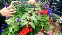 How to care for your Hanging Basket through Summer with Judith at Bents Garden & Home