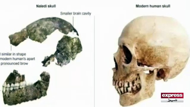 Amazing Videos Science Has Found Old Human Skull