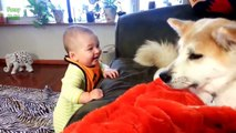Funny cats , Dogs and babies playing together   Cute Dog & cat & baby compilation Dogs life