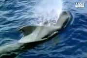 Santuario Pelagos, allarme WWF