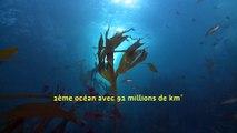 Plongez dans la #BiodiversiteMarine - [video 1 - Iroise]