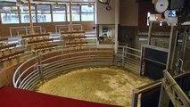 Fièvre catarrhale : les éleveurs bovins de la Nièvre et de Saône-et-Loire ne peuvent plus exporter