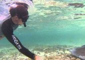 Snorkeler Takes Selfie With Stingray