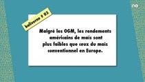 Maïs : malgré les OGM, les rendements US sont plus faibles qu'en Europe / BALIVERNE #03