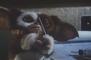 Bande-annonce : Gremlins 2 - VF