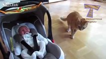 Cats and dogs meeting babies for the first time - Cute animal compilation