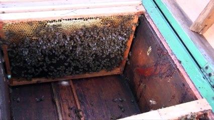 Jak Wygląda Ul? Odkrywamy Tajemnice Pszczół- Baw się z nami
