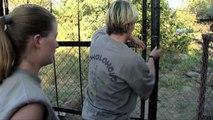 Honey Badger Houdini - Honey Badgers: Masters of Mayhem