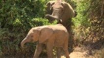 Kenya: Google Street View piste désormais aussi les éléphants