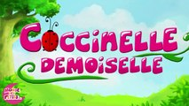 Coccinelle, demoiselle