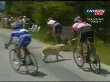 Tour The France 2007----hits a dog!