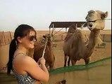 Camel Feeding in Camel Farm - Desert Safari Tours